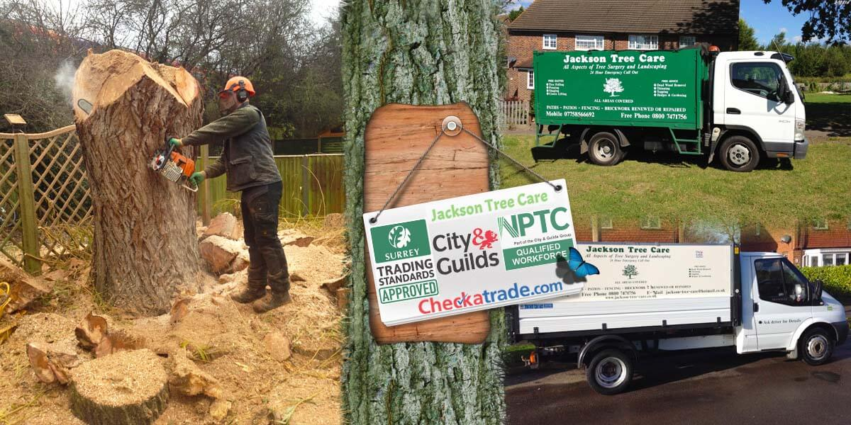Professional Tree Felling