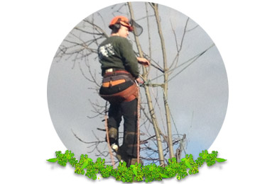 Tree Pruning in Caterham