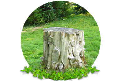 Stump Removal in Lingfield