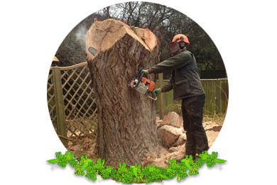 Tree Felling & Removal in Surrey